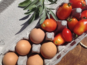 Fresh eggs & toms from my awesome friend Caroline